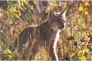 131_wildlife_&_hot_springs_ara-adwh_20140923_154256_1353.jpg